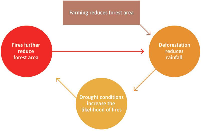 Positive feedback processes and deforestation in the Amazon.