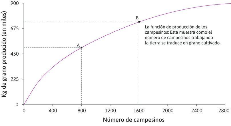 Producto cuando hay 1600 agricultores : El punto B de la función muestra la cantidad de grano producida por 1600 agricultores.