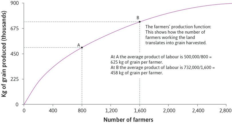 The average product diminishes : At A, the average product of labour is 500,000 ÷ 800 = 625 kg of grain per farmer. At B, the average product of labour is 732,000 ÷ 1,600 = 458 kg of grain per farmer.