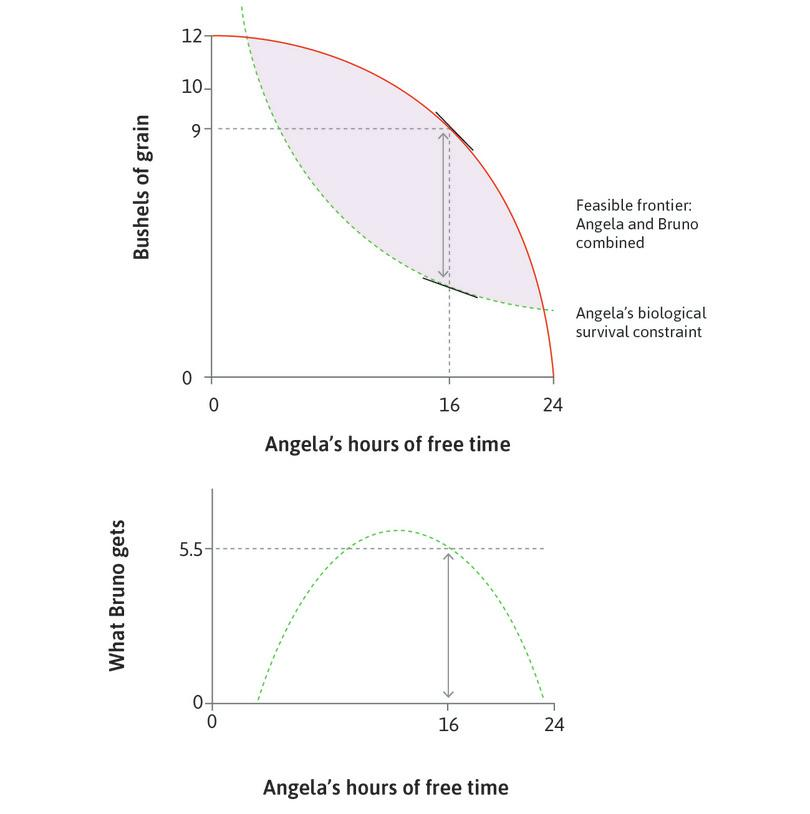 When Angela works for 8 hours : Bruno could take 5.5 bushels without jeopardizing his future benefit from Angela's labour. This is shown by the vertical distance between the feasible frontier and the survival constraint.