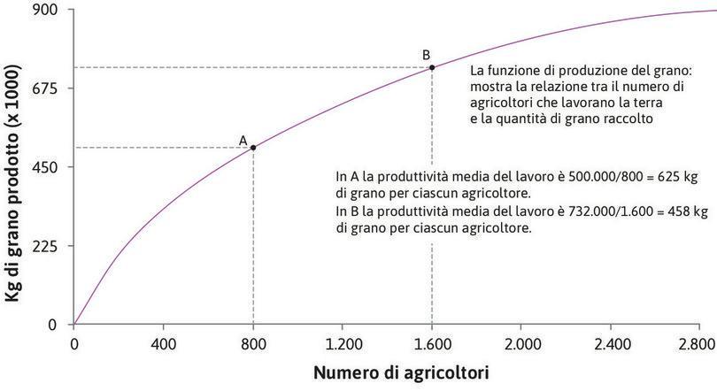 Il prodotto medio diminuisce : In A la produttività media del lavoro è 500.000 ÷ 800 = 625 kg  di grano per agricoltore. In B la produttività media del lavoro è 732.000 ÷ 1.600 = 458 kg di grano per agricoltore.