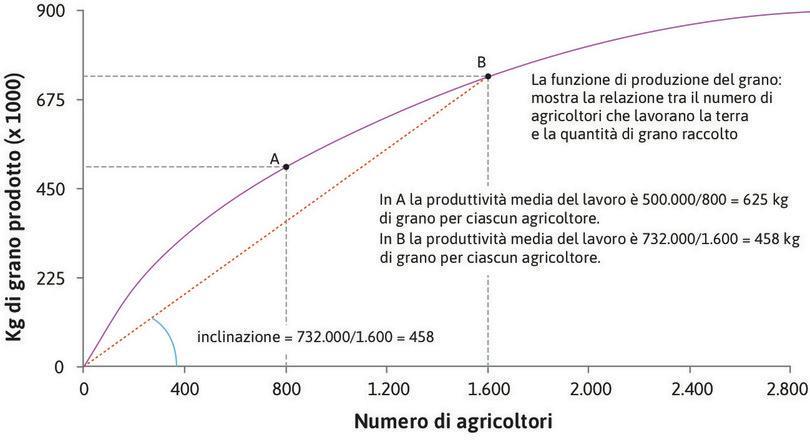 L'inclinazione del raggio indica la produttività media : L'inclinazione del raggio uscente dall'origine passante per il punto B sulla funzione di produzione mostra la produzione media nel punto B. L'inclinazione è 458, corrispondente ai 458 kg per agricoltore quando il numero di agricoltori che lavorano la terra è 1.600.