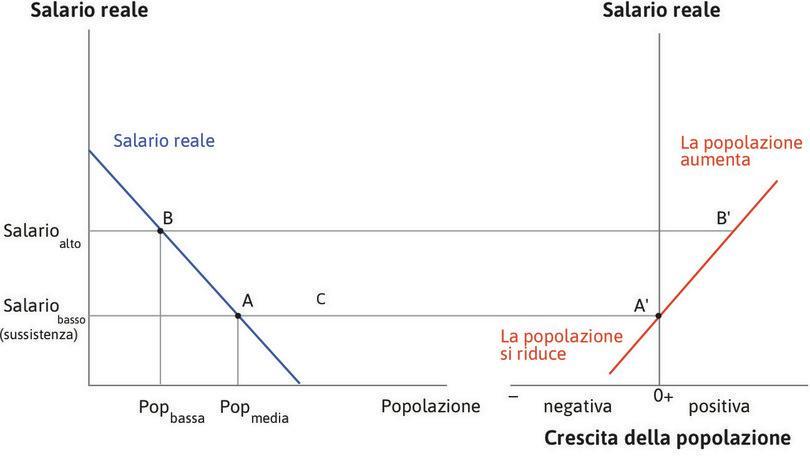 L'economia ritorna all'equilibrio : Supponiamo che l'economia si trovi nel punto B, con un salario più elevato e una popolazione inferiore.  Il punto B' nel grafico a destra mostra che la popolazione crescerà.