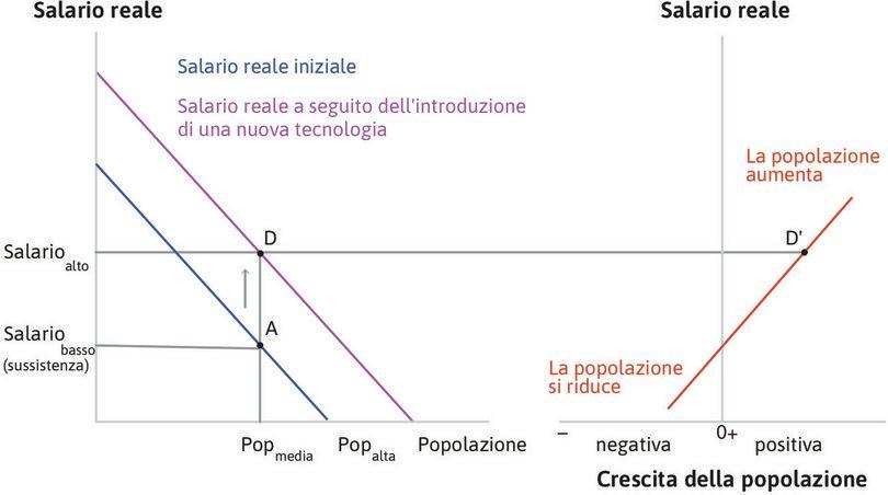La popolazione comincia a crescere : Nel punto D, il salario è cresciuto oltre il livello di sussistenza e quindi la popolazione comincia a crescere (punto D').